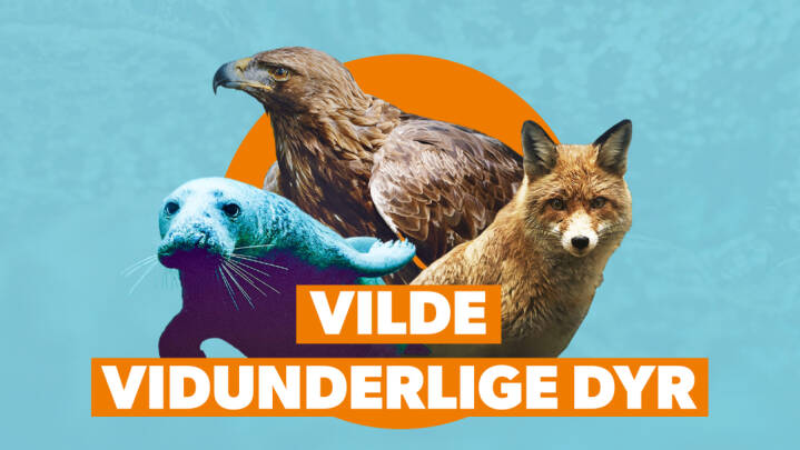 Seneste kampagne: Vilde vidunderlige dyr