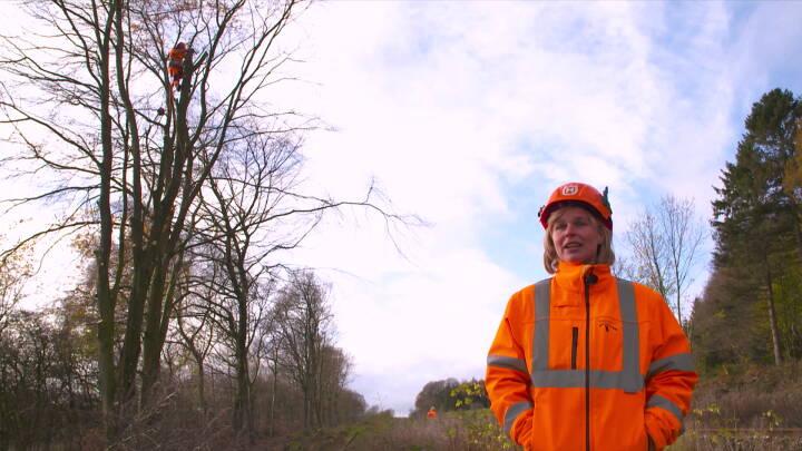 Døde træer skal lokke flagermus, svampe og biller frem langs togskinnerne