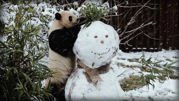Så kom vinteren! Se de flotte snebilleder