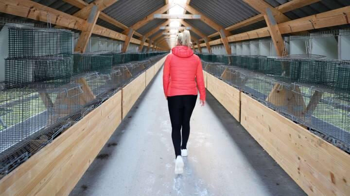 BILLEDER: Danske ex-minkavlere går nye tider i møde