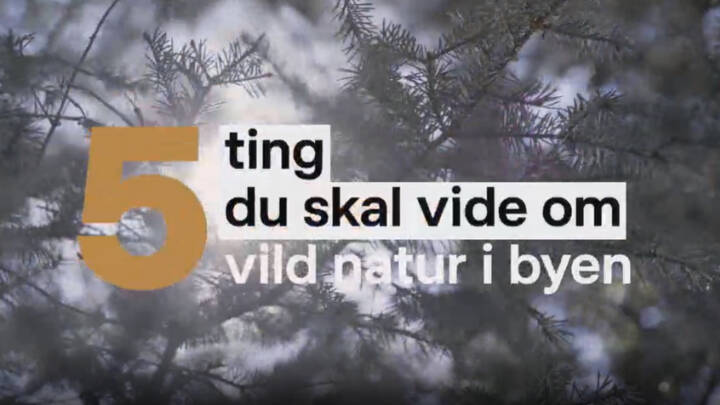 5 ting du skal vide om vild natur i byen