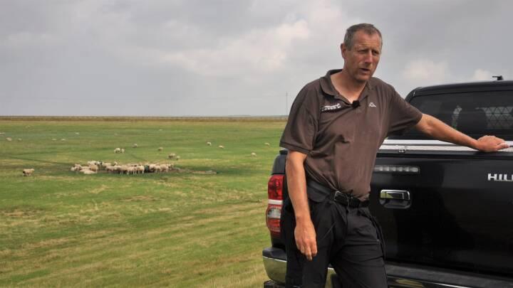 Når det blæser op, må Niels Erik et par gange om ugen redde sine får fra oversvømmelse