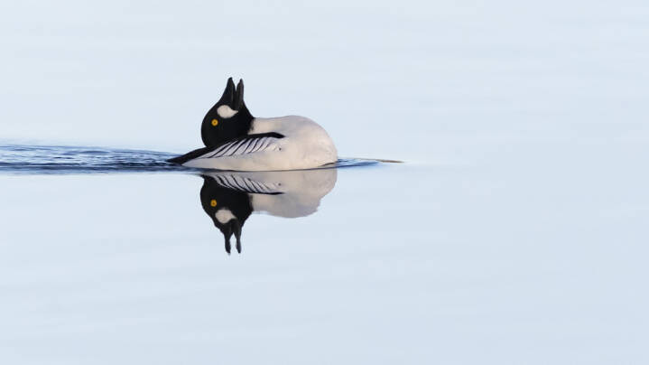 Man kan ikke bestille fuglene til at være der på et bestemt tidspunkt, men Per Finn er både dygtig - og lidt heldig