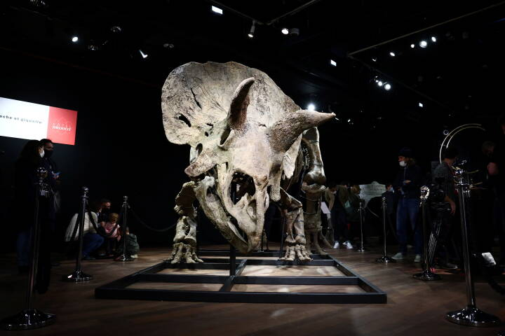 66 millioner år gammelt dinosaurskelet solgt på aktion: 'Det er ikke et spor vigtigt fund'