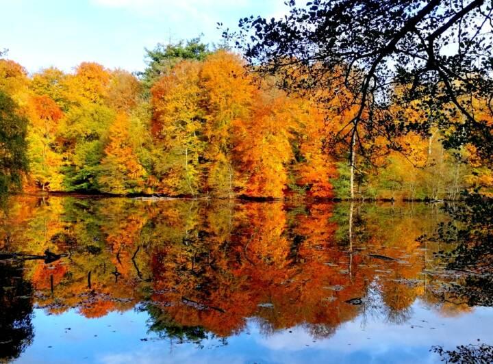 Dagens vejr: Flot efterårsdag med sol og varme i vente