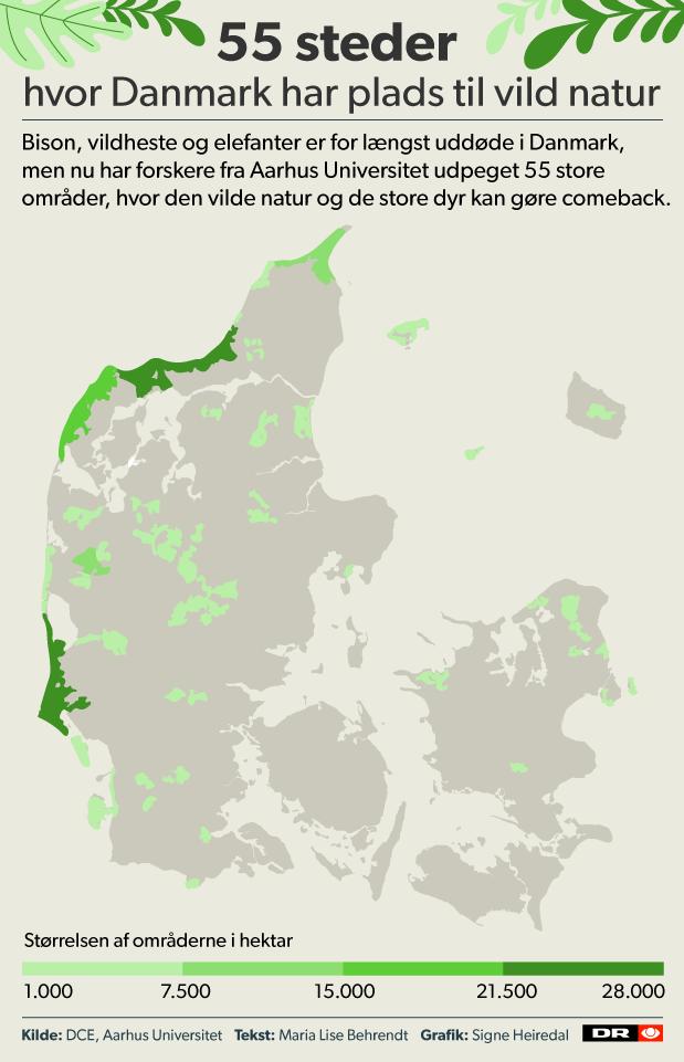 a00ec81aa05f Kun i de tre største områder i Jylland - der alle er over 200 km2 - vil  store dyr som elefant og næsehorn kunne bo. (Obs  Kortet viser ikke  områdernes ...