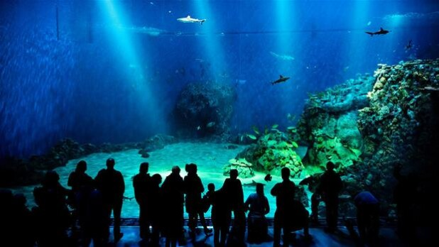 Splinternyt Akvarium Skal Allerede Renoveres Kultur Dr