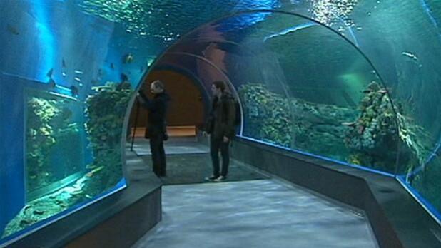 Den Blå Planet Kan Trække Gæster Til Hirtshals Nordjylland Dr
