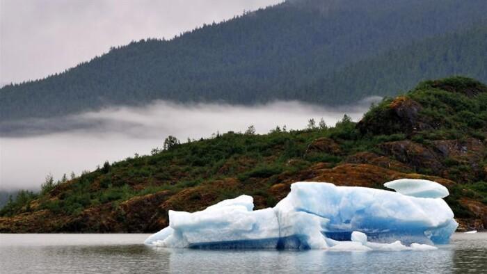 Klimaændringer kan give store skove på Grønland | Miljø | DR